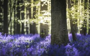 Картинка лес, свет, природа, весна