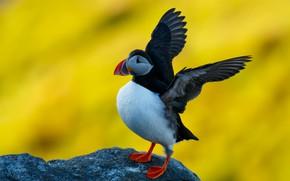 Картинка птица, камень, тупик, желтый фон, взмах крыльев