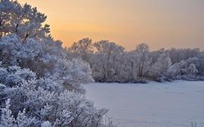 Картинка зима, иней, снег, деревья, пейзаж, закат, природа, вечер, кусты
