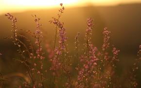 Картинка закат, цветы, фон