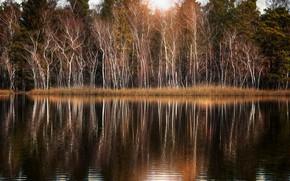 Картинка деревья, озеро, парк