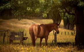 Картинка дерево, конь, поляна, лошадь, забор