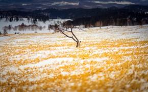 Картинка поле, осень, снег, дерево