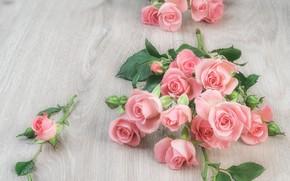 Картинка стол, розы, розовые, бутоны