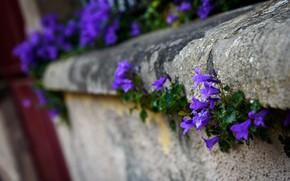 Картинка цветы, город, улица