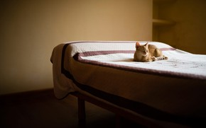 Картинка кот, свет, комната, стена, отдых, кровать, интерьер, минимализм, покрывало, рыжий, постель, лежит, спальня, в тон, …