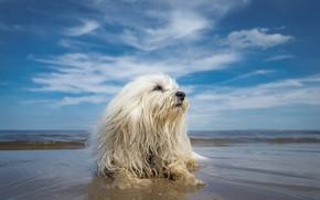 Картинка пляж, небо, собака