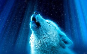 Картинка лучи, фон, волк