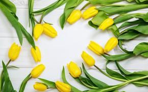 Картинка цветы, тюльпаны, желтые тюльпаны