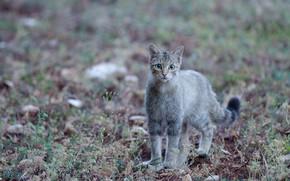 Картинка кошка, взгляд, боке, котейка