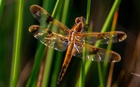 Картинка трава, макро, свет, стебли, крылья, стрекоза, насекомое, боке, размытый фон