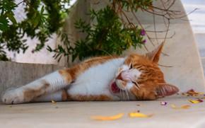Картинка язык, кошка, кот, морда, листья, ветки, отдых, улица, рыжий, спит, лежит, зевает, сонный