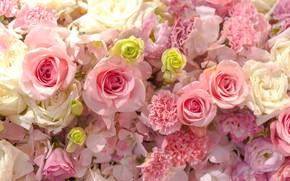 Картинка фон, нежные, бутоны, pink, roses