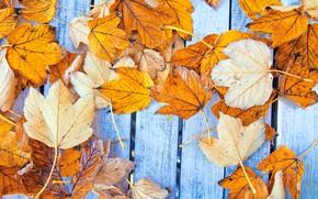 Обои осень, листья, фон, дерево, colorful, клен, wood, background, autumn, leaves, осенние, maple