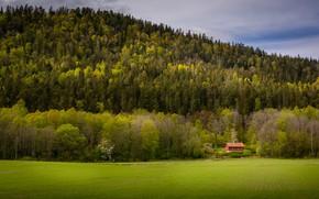 Картинка поле, лес, дом