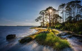 Картинка песок, солнце, деревья, побережье, утро