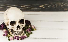 Обои цветы, череп, Halloween, skull