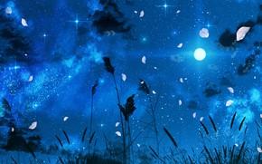 Картинка ночь, природа, луна, лепестки