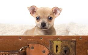 Картинка собака, щенок, чемодан