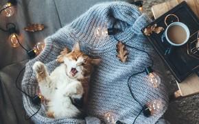 Картинка осень, кот, тепло, кофе, котик, лампочки, свитер
