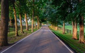 Картинка дорога, деревья, аллея, заборы