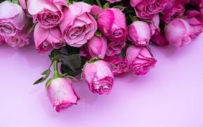 Картинка цветы, крупный план, розы, букет