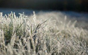 Картинка иней, трава, солнце, блеск