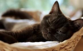 Картинка кошка, котенок, отдых, черный, спит, лежит