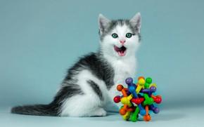 Обои язык, кошка, взгляд, котенок, фон, голубой, черно-белый, игрушка, портрет, малыш, котёнок, сидит, облизывается, разноцветная, зеленоглазый, ...