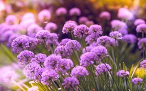 Картинка Цветы, Цветок, Растение, Лепестки, Растения, Flower, Flowers, Flora, Plants, Close-up, Blooming, Bloom, Флора, Plant, Todd …