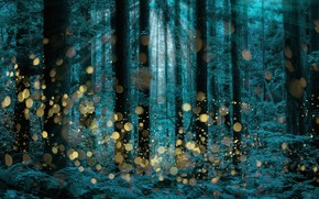 Картинка trees, firefly, longexposure, Shining forest