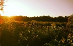 Картинка Солнце, Небо, Природа, Трава