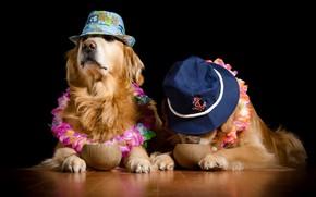 Картинка собаки, цветы, кокосы