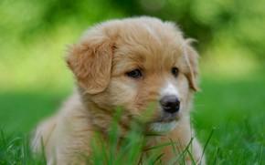 Картинка портрет, собака, щенок, мордашка, боке, пёсик