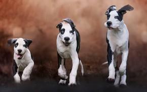Картинка собаки, фон, щенок, семейка, троица
