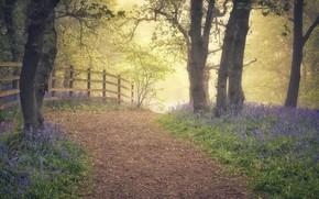 Картинка цветы, туман, парк, весна