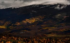 Картинка осень, лес, деревья, горы, темный фон, пасмурно, холмы, склоны