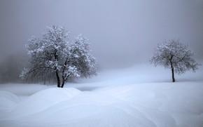 Картинка зима, снег, деревья, Швейцария, сугробы