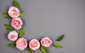 Картинка цветы, Pink, розовые, flowers, декор