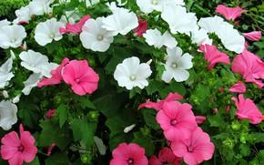 Картинка лето, цветы, клумба