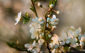 Картинка цветы, природа, ветка, весна, цветение