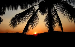 Обои закат, пальма, силуэт, зарево