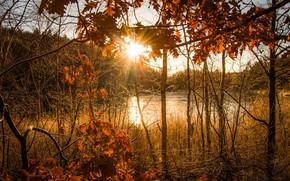 Картинка осень, солнца свет, autumn light
