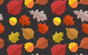 Обои осень, листья, фон, colorful, background, autumn, pattern, leaves, осенние, seamless