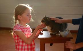 Картинка кошка, кот, животное, девочка, косички, ребёнок, табурет, Постонен Екатерина