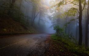 Картинка Autumn, Yellow, Road, Fog, Forest