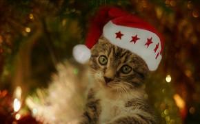 Картинка кошка, взгляд, свет, красный, огни, поза, темный фон, котенок, серый, праздник, портрет, размытие, Рождество, милый, …