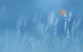 Картинка бабочка, butterfly, Edy Pamungkas