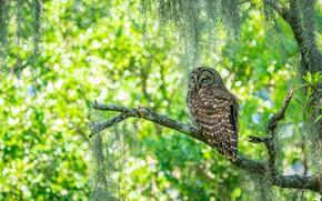 Картинка свет, ветки, дерево, сова, птица, сон, спит, зеленый фон, боке, закрытые глаза, неясыть