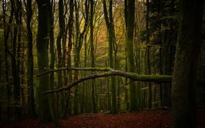 Картинка осень, лес, ветки, дерево, стволы, ветка, бревно, валежник, поваленное